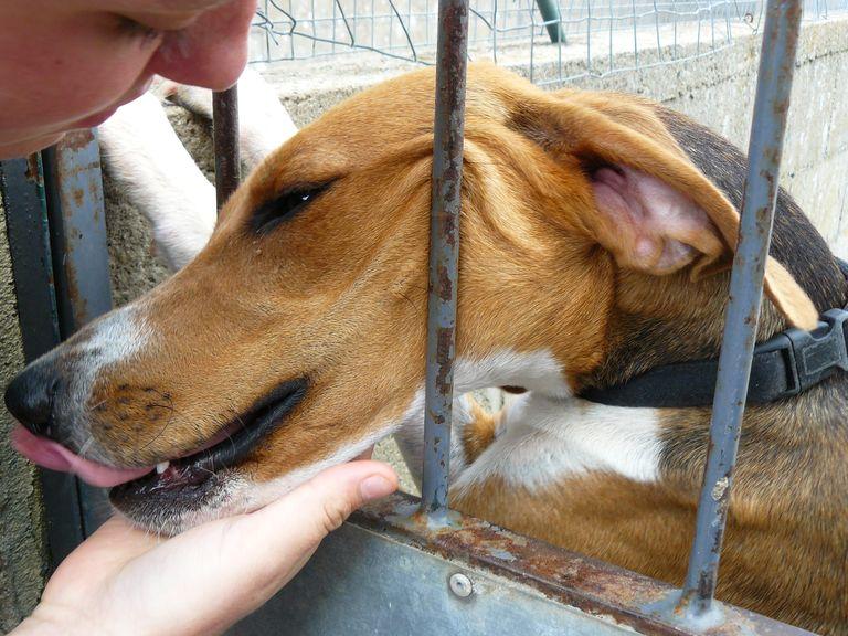 Les chiens de fourrière NOTRE PRIORITE !!!!!!! Anglof10