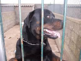 Les chiens de fourrière NOTRE PRIORITE !!!!!!! Images10