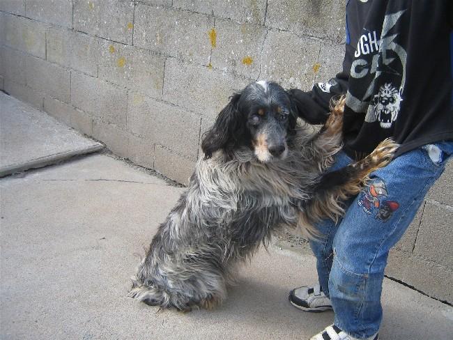 Les chiens de fourrière NOTRE PRIORITE !!!!!!! Img-1611
