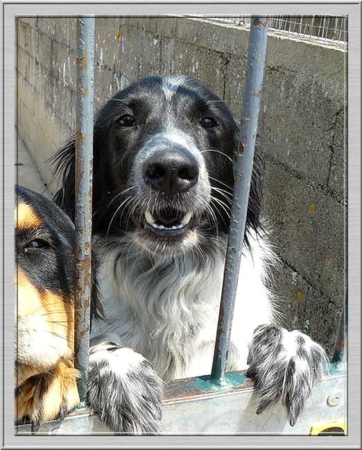 Les chiens de fourrière NOTRE PRIORITE !!!!!!! Maleno10