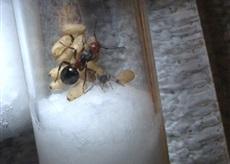 Fourmis capturée au chalet D6ebea11