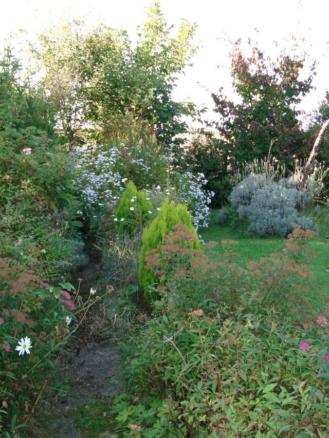 le jardin de Giroflee - Page 5 Coul_113