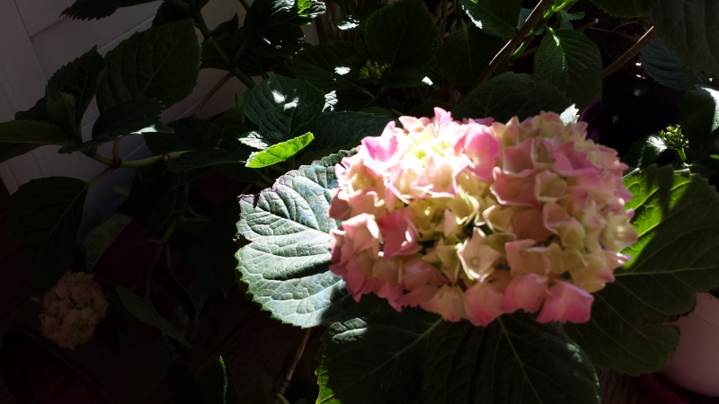 fleurs en vrac! - Page 12 20150510