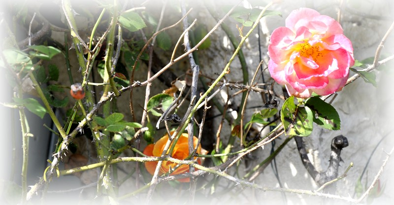 fleurs en vrac! - Page 12 _dsc0052