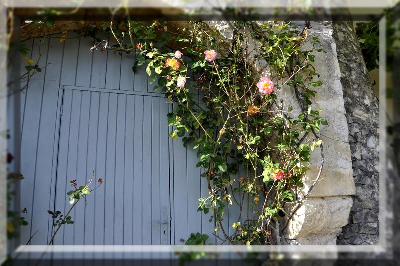 fleurs en vrac! - Page 12 _dsc0053