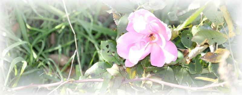 fleurs en vrac! - Page 12 _dsc0057