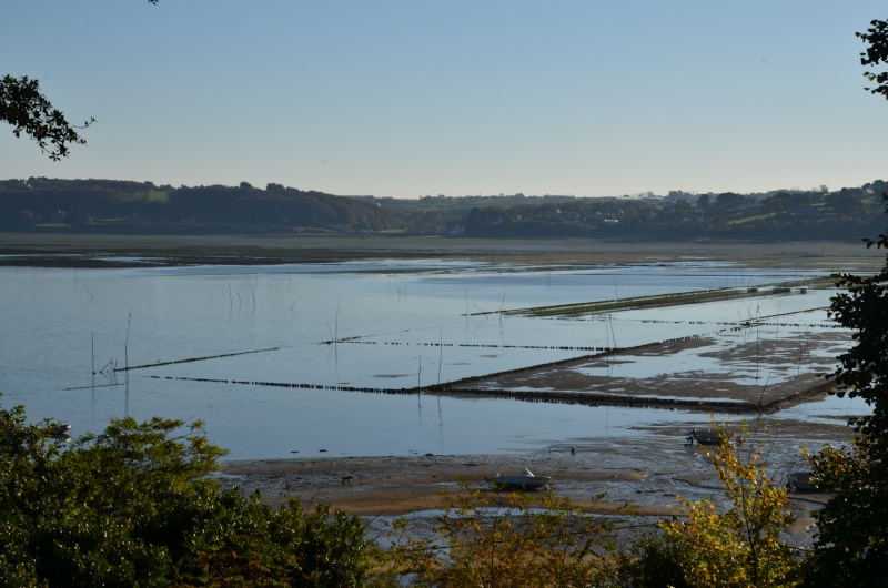 Bretagne : côte d'Armor fin Octobre 2015 Dsc_6410
