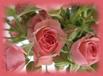 Passeport pour l'éveil spirituel Roses-10