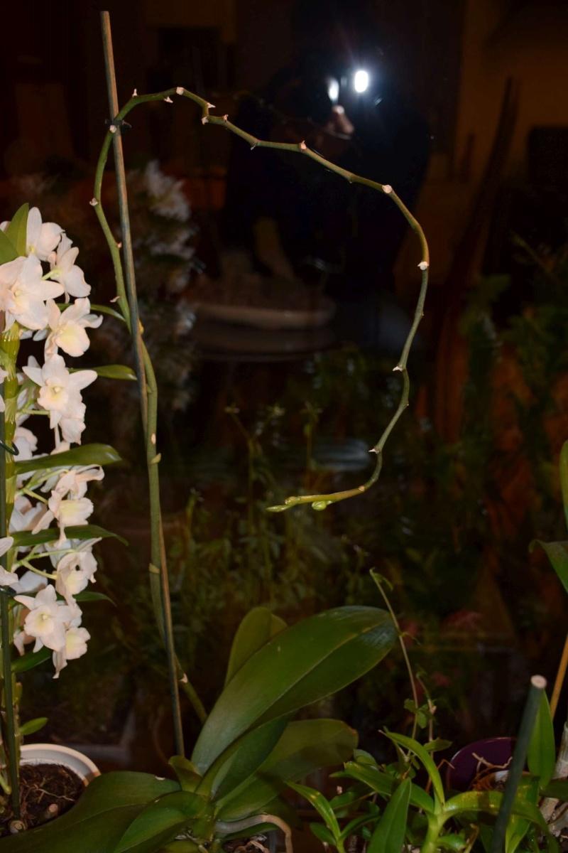 Floraison du moment Dsc_1358