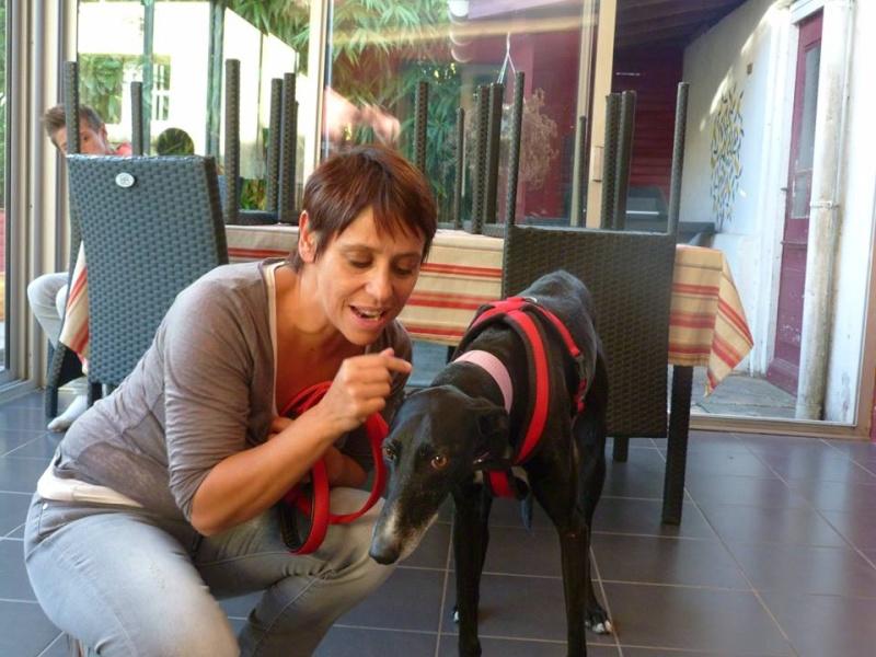 Pegaso, galgo noir.Scooby France Adopté  - Page 2 Campeo10