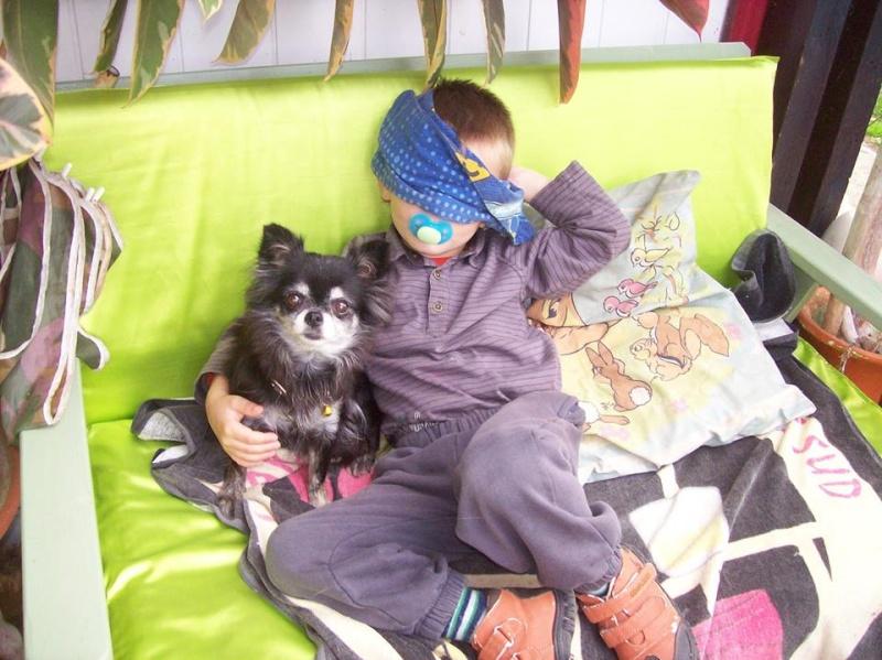 Enora chihuahua 6 ans, polis longs - Adoptée SCOOBY FRANCE Enora_11