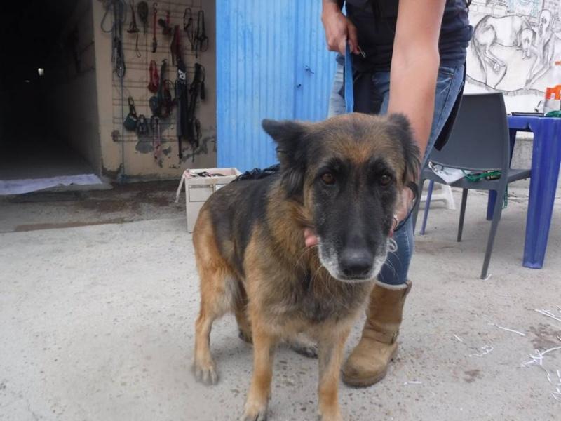 josephina berger Allemant née en 2007  Scooby France Adoptée  Joseph10