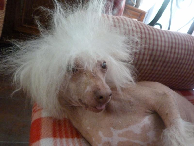 oui j'vous jure elle a recommencé à jouer le coiffeur !!! Zazou10