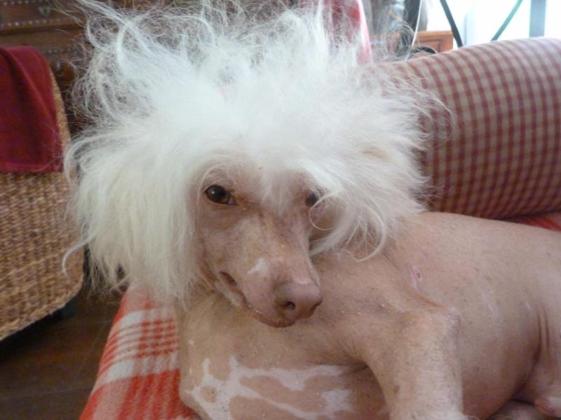 oui j'vous jure elle a recommencé à jouer le coiffeur !!! Zazou_10