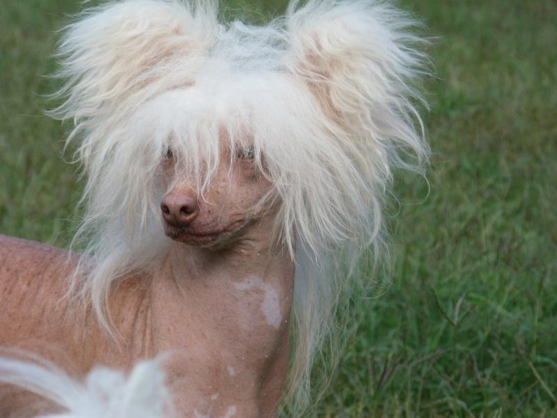 oui j'vous jure elle a recommencé à jouer le coiffeur !!! Zazou_14