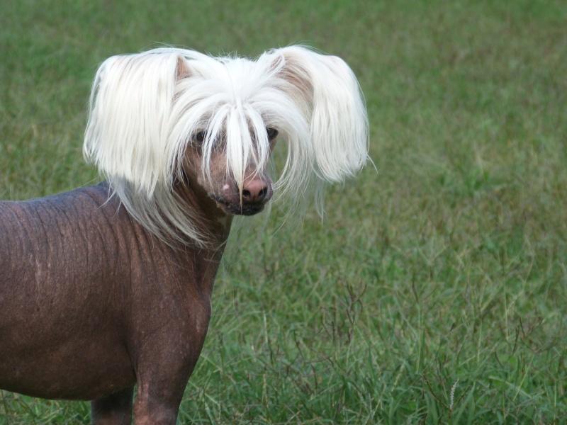 oui j'vous jure elle a recommencé à jouer le coiffeur !!! Zazou_18