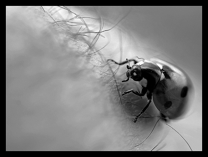Rouler petit bolide ... Photo_10