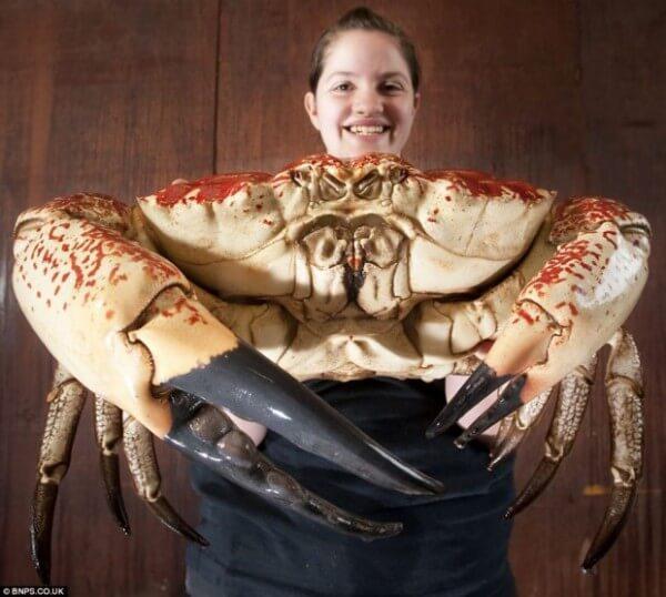 Curiosités et Beautés du monde 2 Crabe_10