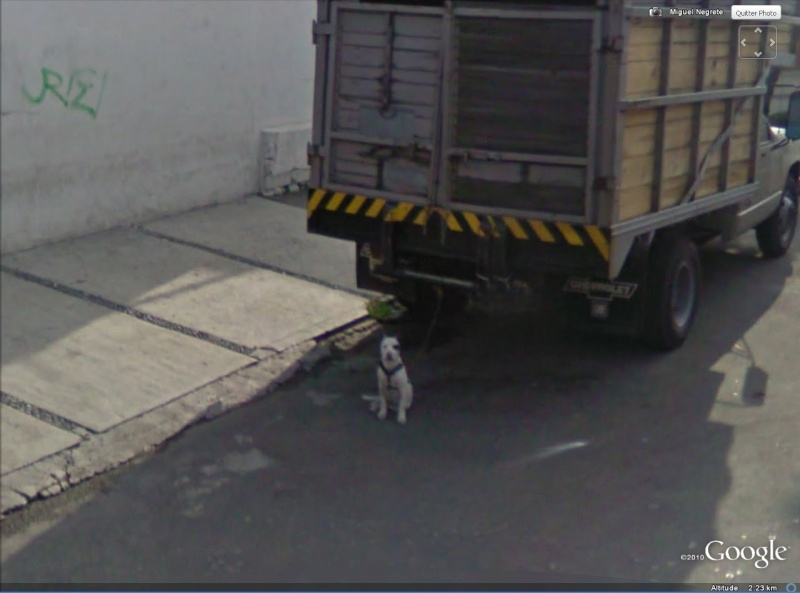 STREET VIEW: Anti vol Canin, Mexico, Mexique Antivo10