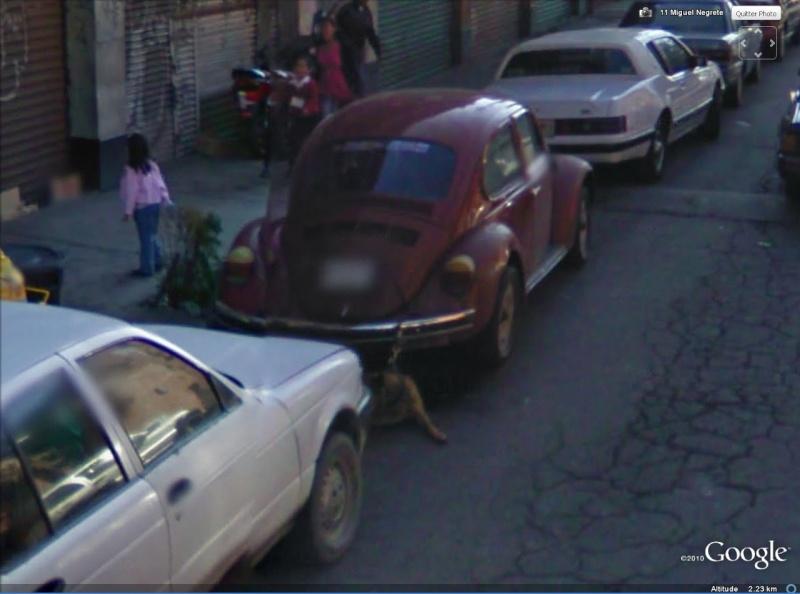 STREET VIEW: Anti vol Canin, Mexico, Mexique Antivo11