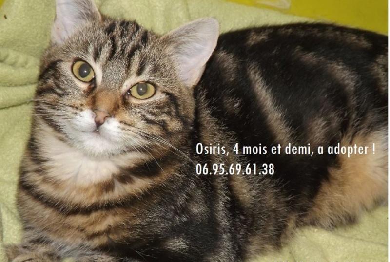 OSIRIS, Chaton mâle tigré de 6 mois Osiris10