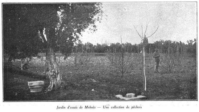 L'Ecole D'Horticulture de Meknès Jardin14