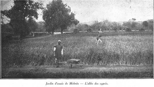L'Ecole D'Horticulture de Meknès Jardin15