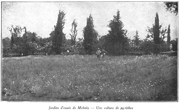 L'Ecole D'Horticulture de Meknès Jardin19