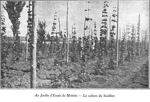 L'Ecole D'Horticulture de Meknès Jardin20