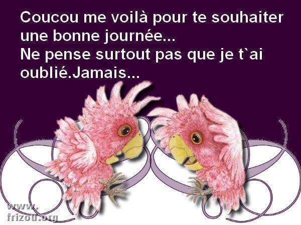 citation image Coucou10