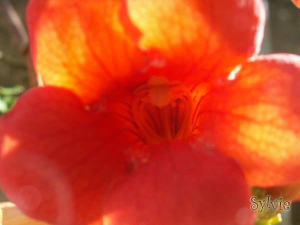 Fleurs ... tout simplement Fleur210
