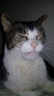 Mon chat a une ostéomyélite suite à un abcès dentaire - qui connait cette pathologie ? - Page 2 14261211