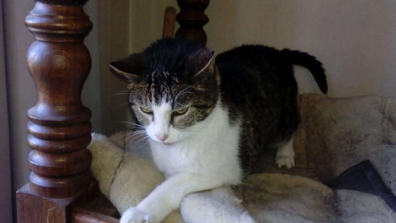 Mon chat a une ostéomyélite suite à un abcès dentaire - qui connait cette pathologie ? - Page 2 Img_2011