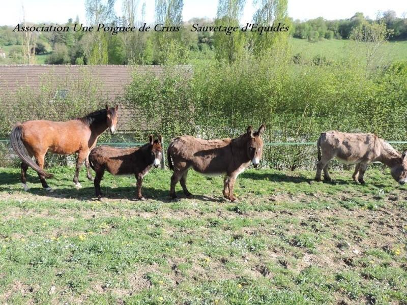 sacha, Biquet, Rosée, Barnabet Sacha10