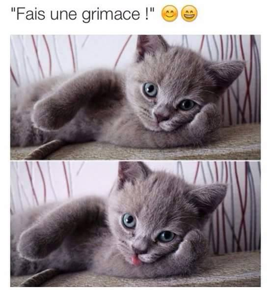 humour - Page 38 12189010