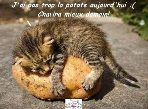 humour - Page 40 12208613