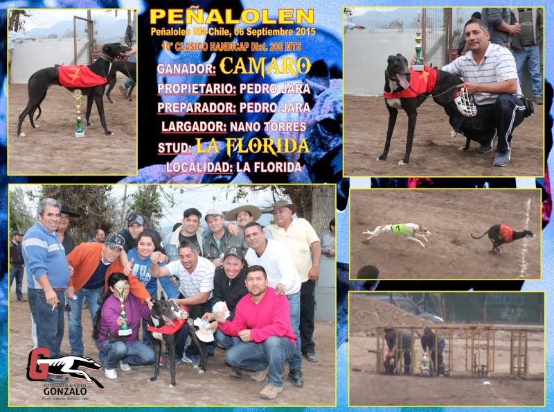 GRANDES CLASICOS PARA DOMINGO 06 DE SEPTIEMBRE EN CANODROMO PEÑALOLEN. 10-cla10