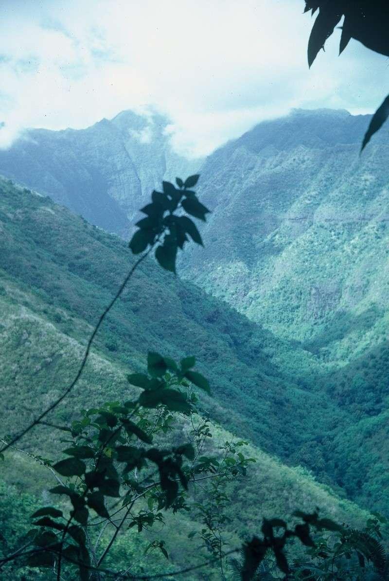 [Campagnes] Souvenirs de mon arrivée au camp d'Arué à Tahiti Rotati11