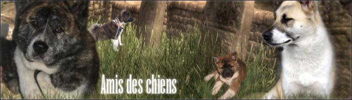 Amis-des-chiens
