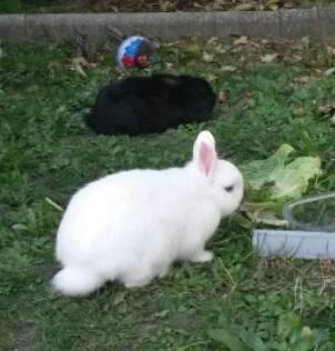 Olive, lapine noire, jeune - Page 24 12208610