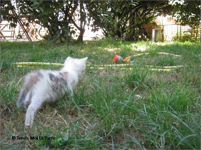 SPIKA femelle tricolore de 3 mois  Image218
