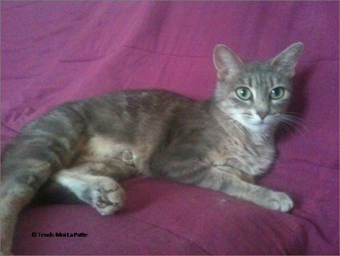 ADELIA rebaptisée FLIPPY gentille femelle de 2 ans  Image718