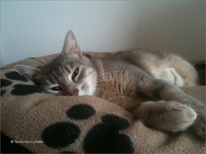 ADELIA rebaptisée FLIPPY gentille femelle de 2 ans  Image719