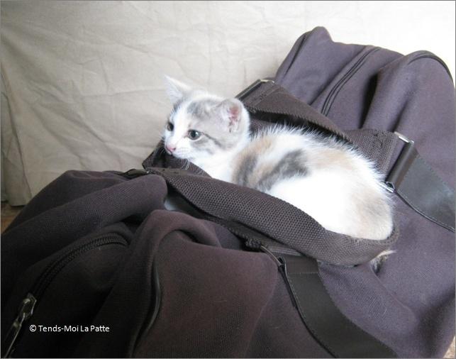 SPIKA femelle tricolore de 3 mois  Image816