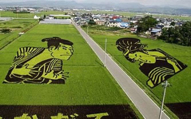 الزراعة في اليابان Image010