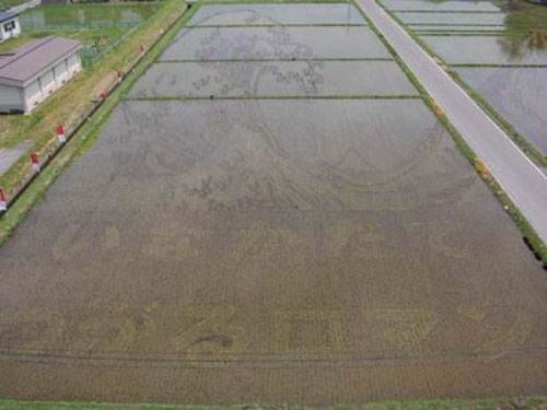 الزراعة في اليابان Image012
