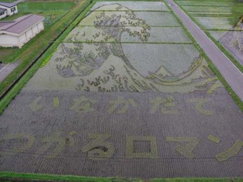 الزراعة في اليابان Image013