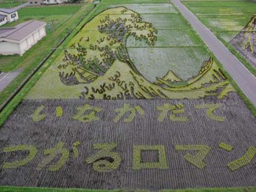 الزراعة في اليابان Image015