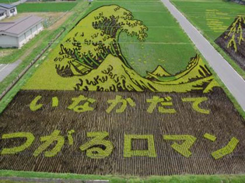 الزراعة في اليابان Image016