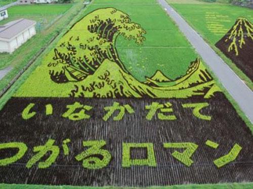 الزراعة في اليابان Image017